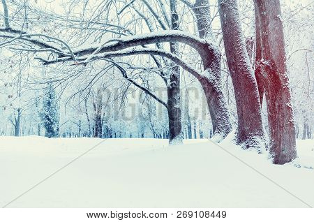 Winter landscape - wonderland winter forest with deciduous winter trees covered with frost. Snowy winter scene, colorful winter landscape