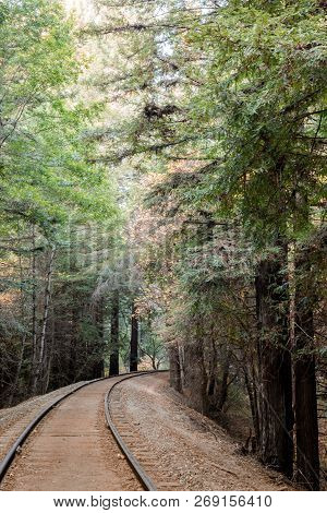 Railroad Tracks and Redwoods. Henry Cowell Redwoods State Park, Santa Cruz County, California, USA. poster