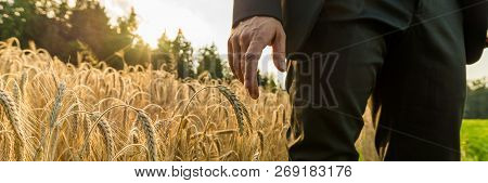 Wide View Image Of Businessman In Elegant Suit Standing In Golden Ripening Wheat Field