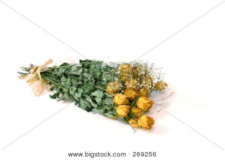 Dried Yellow Rose's