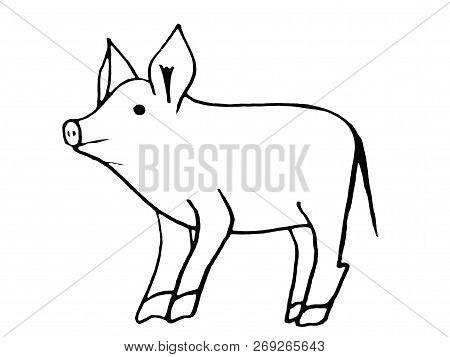 Simbol Of 2019 Year. Pig  Isolated On White Background. Pork Meat. Design Element For Label,emblem,