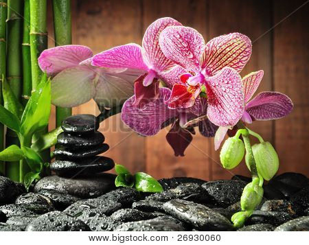 spa concept bamboo grove, pink orchid and black zen stones on the wooden background ,focus on the orchid