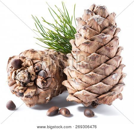 Pine nuts cone and pine nuts on the white background. Organic food.