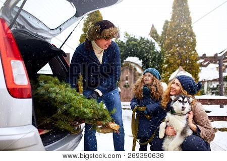 Father Brought Christmas Tree In Large Trunk Of Suv Car. Daughter, Mother And Dog Meet Dad Happily H