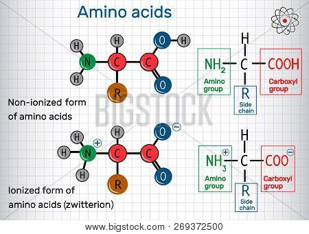 General formula of amino acids, ionized and non-ionized (zwitterion) forms. Structural chemical formula and molecule model. Sheet of paper in a cage. Vector illustration poster