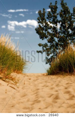 Top Of A Sand Dune