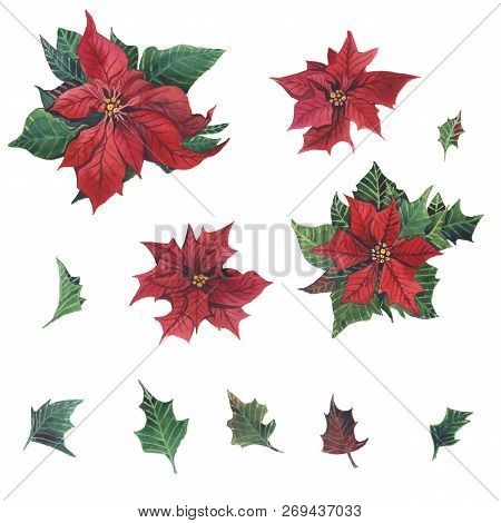 Watercolor Poinsettia With Christmas Floral Decor. Hand Painted Traditional Flower And Plants: Holly