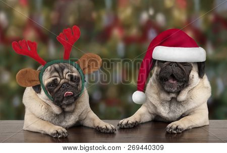 Funny Cute Christmas Pug Puppy Dogs Leaning On Wooden Table, Wearing Santa Claus Hat And Reindeer An