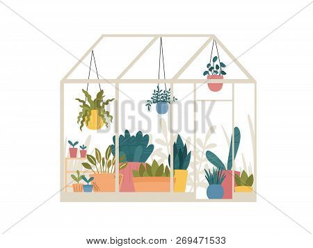 Greenhouse With Potted And Hanging Garden Plants Vector Illustration, Cute Scandinavian Hygge Style.