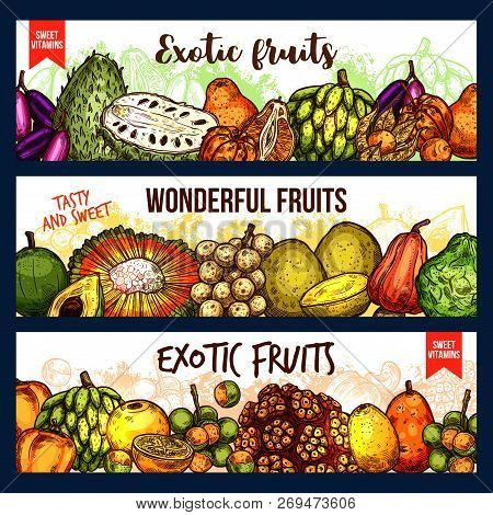 Exotic Fruits Vector Sketch Banners. Bergamot And Cashew, Jackfruit And Sugar Apple, Chompoo And Sou