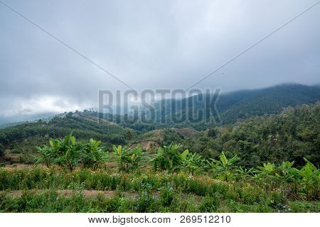 Flower Meadow on the Mountain with haze on the background and countryside view, Traveling in Thailand poster
