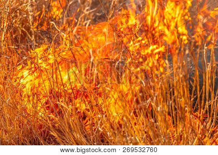 Fire Background Conceptual. Close-up Of Forest In An Area Of Trees And Bush In Flames. Dangerous Dry