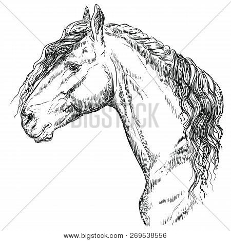 Friesian Horse Portrait. Horse Head  In Profile In Monochrome Color Isolated On White Background. Ve