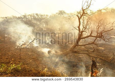 Forest Fire With Smoke In South Africa. Dangerous Fires In Dry Season. Soft Sunlight. African Landsc