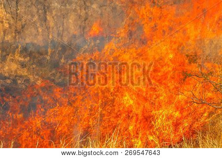 Conceptual Climate Change. Fire Background. Close-up Of Bush In Flames. Dangerous Fires In Dry Seaso
