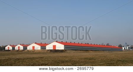 Modern Poultry Farms