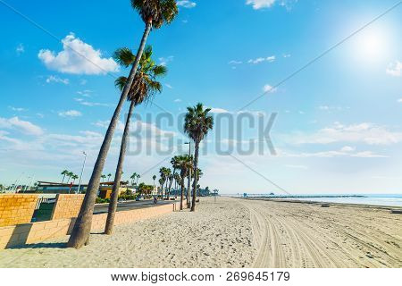 Palm Trees On The Sand In Oceanside Beach. Southern California, Usa