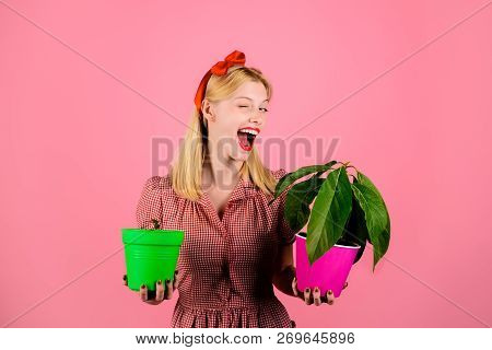 Winking Woman Holds Flower In Pot. Beautiful Florist Holds House Plants. Choice Of Plants. Woman Hol