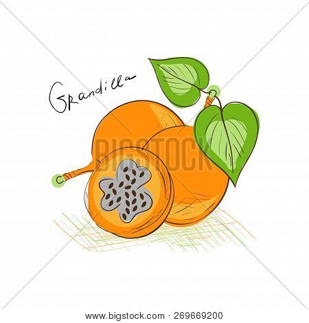 Granadilla. Exotic Fruit. Sketch. Drawing On A White Background.