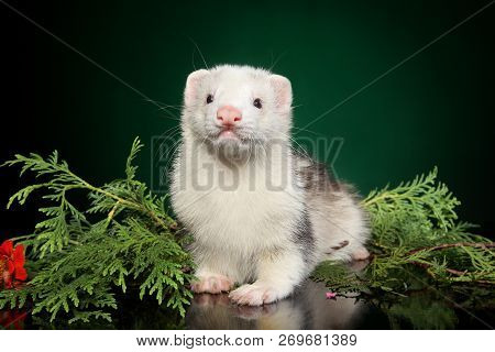 Polecat Puppy Lies In Fern Leaves On A Green Background. Animal Themes