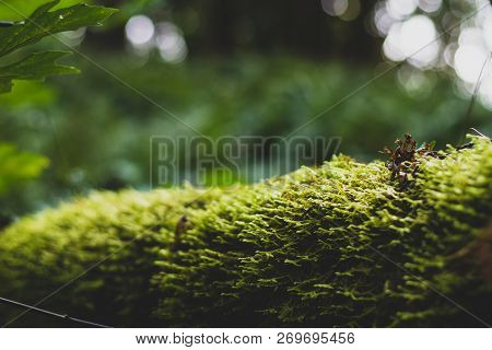 Moss Covered Log Close Up With Leaves And Trees In The Distance