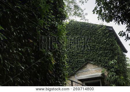 Ivy Around Brick House In Local Resort, Stock Photo