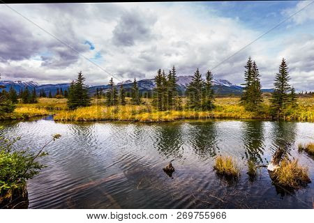 Autumn wind drives ripples in the dark water. The lakes, yellow autumn grass and firs of Canada. The valley along the Pocahontas road. Concept of photo-tourism and active tourism