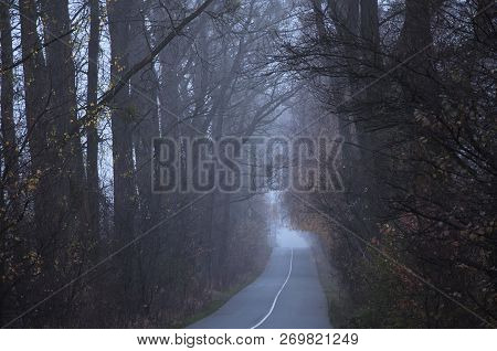 Empty Road In The Morning Passing Through A Forest Covered In Mist Or Fog  (concept Loneliness).