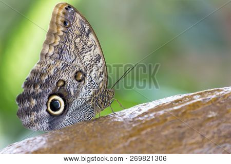 Macro Of A Beautiful Brown Butterfly On A Dead Leaf Seen From The Side