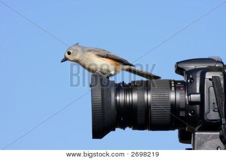 Meisen auf Kamera