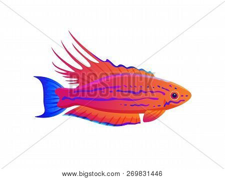 Filamented Flasher Wrasse Exotic Ocean Fish Banner, Vector Illustration Of Multicolored Animal With