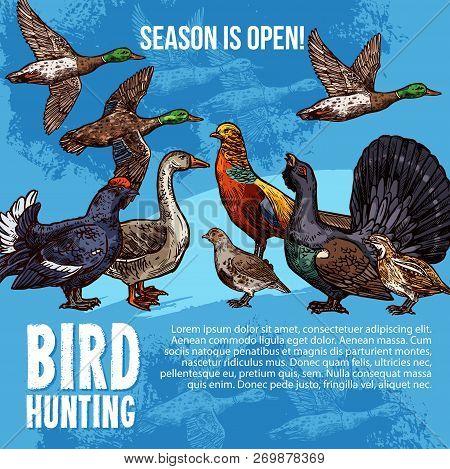 Birds Hunt Open Season Vector Poster. Hunting Sport Adventure Design Of Wild Birds Duck And Peacock,