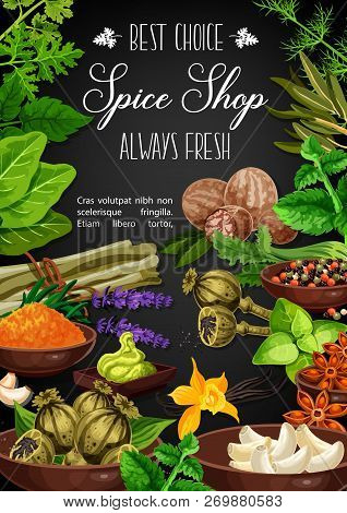 Herbs And Spices Poster Of Culinary Ingredients And Cooking Herbal Seasonings. Vector Garlic And Nut
