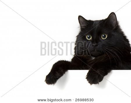 Image of a black cat on a white background