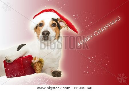 christmas postcard with funny dog as santa and gift