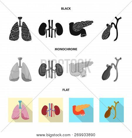 Vector Illustration Of Body And Human Icon. Collection Of Body And Medical Stock Vector Illustration