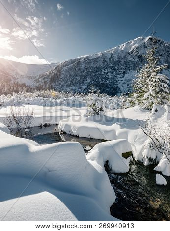 Magical white spruces on a frosty day. Location Carpathian mountain, Ukraine, Europe. Alpine ski resort. Exotic wintry scene. Fabulous winter wallpaper. Happy New Year! Discover the beauty of earth.