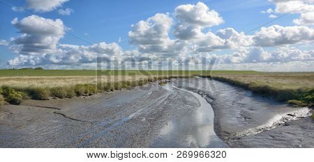 Salt Meadow In Westerhever At North Sea In North Frisia,eiderstedt Peninsula,germany