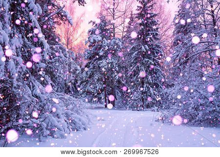 Beautiful Winter Landscape With Forest, Trees And Sunrise. Winterly Morning Of A New Day. Purple Win