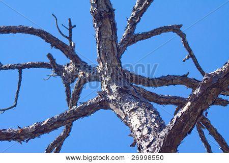 Paper Tree against sky