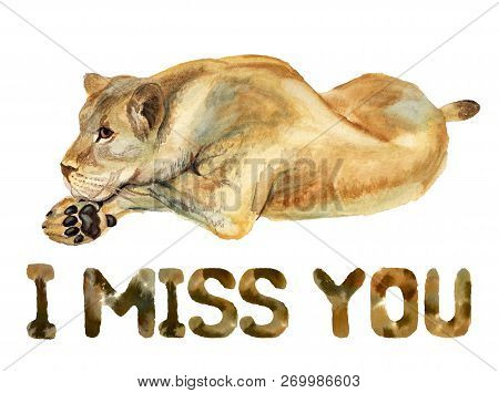 Watercolor Image Of Lioness On White Background With Text I Miss You