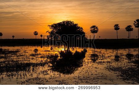 Magical Golden Sunset In The Pantanal Wetlands In Paraguay. The Pantanal Is The Worlds Largest Tropi