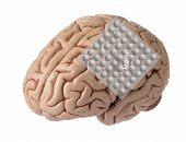 Artificial human brain model, oblique view with graphic of electrode recording brain waves covering motor cortex. poster