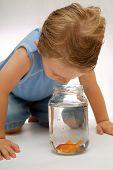 Toddler boy looking at goldfish in jar or bowl. poster