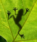Frog shadow on the leaf poster