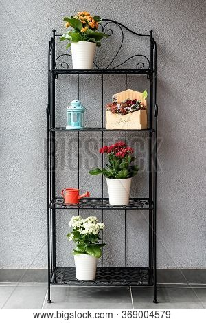 Flowerpots With Blooming Colorful Flaming Katy Plants And Garden Items On A Metal Shelf