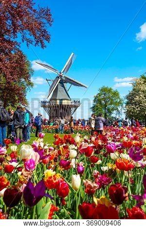 Keukenhof, Netherlands - May, 2018: Blooming Colorful Tulips Flowerbed In Public Flower Garden Keuke