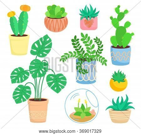 House Indoor Plant, Potted Ceramic Set, Flat Cartoon Flower. Succulents And House Plants, Cactus Col