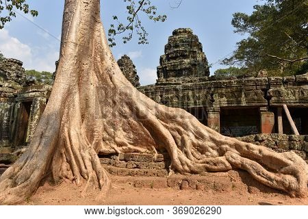 Giant Silk Cotton Tree Roots Background Of Ruins In Angkor Wat, Siem Reap, Cambodia.