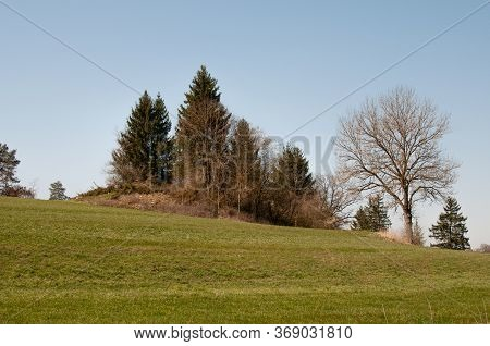 Hilly Landscape With Coniferous And Leafless Deciduous Trees In Early Springtime In Swabian Alb